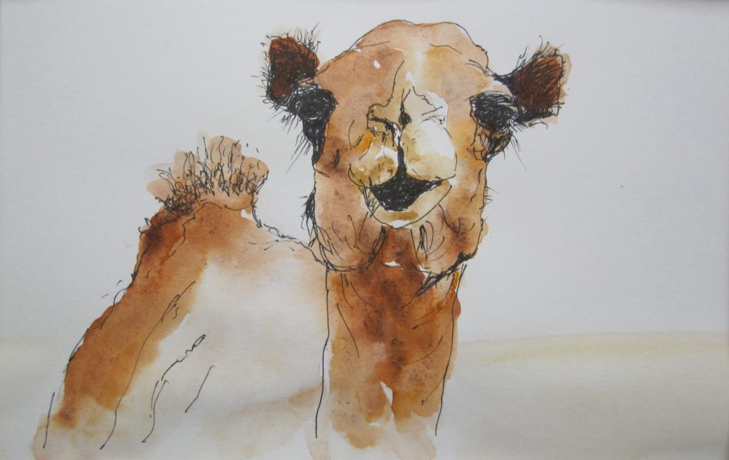 Young-Camel-pen-and-ink-wash