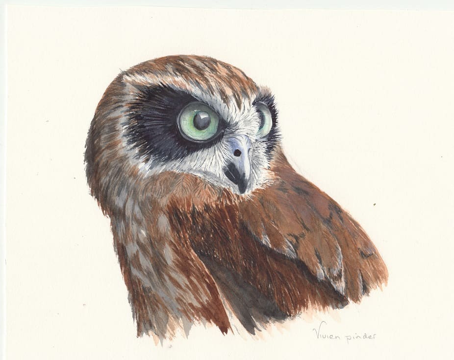 Boobook Owl watercolour