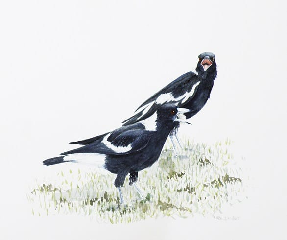 Cmon share Magpies 2 watercolour 2018
