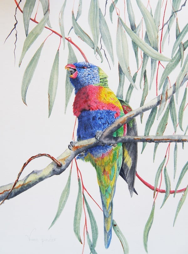 Rainbow Lorikeet - Watercolour 2018