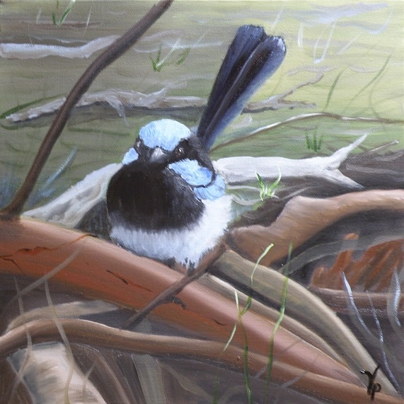 Superb Fairy Wren - Oil
